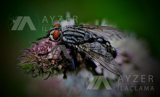 ankara sinek ilaçlama